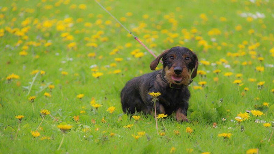 cane natura tenero