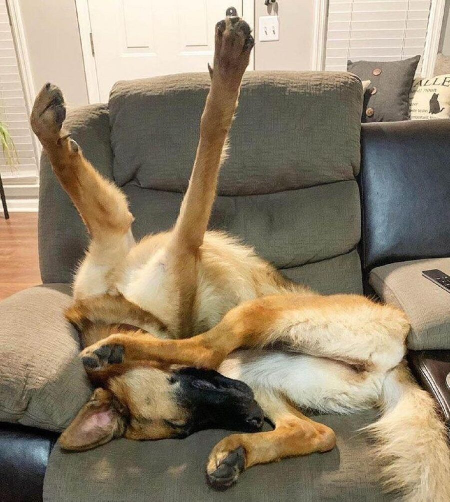 cane sottosopra sveglio