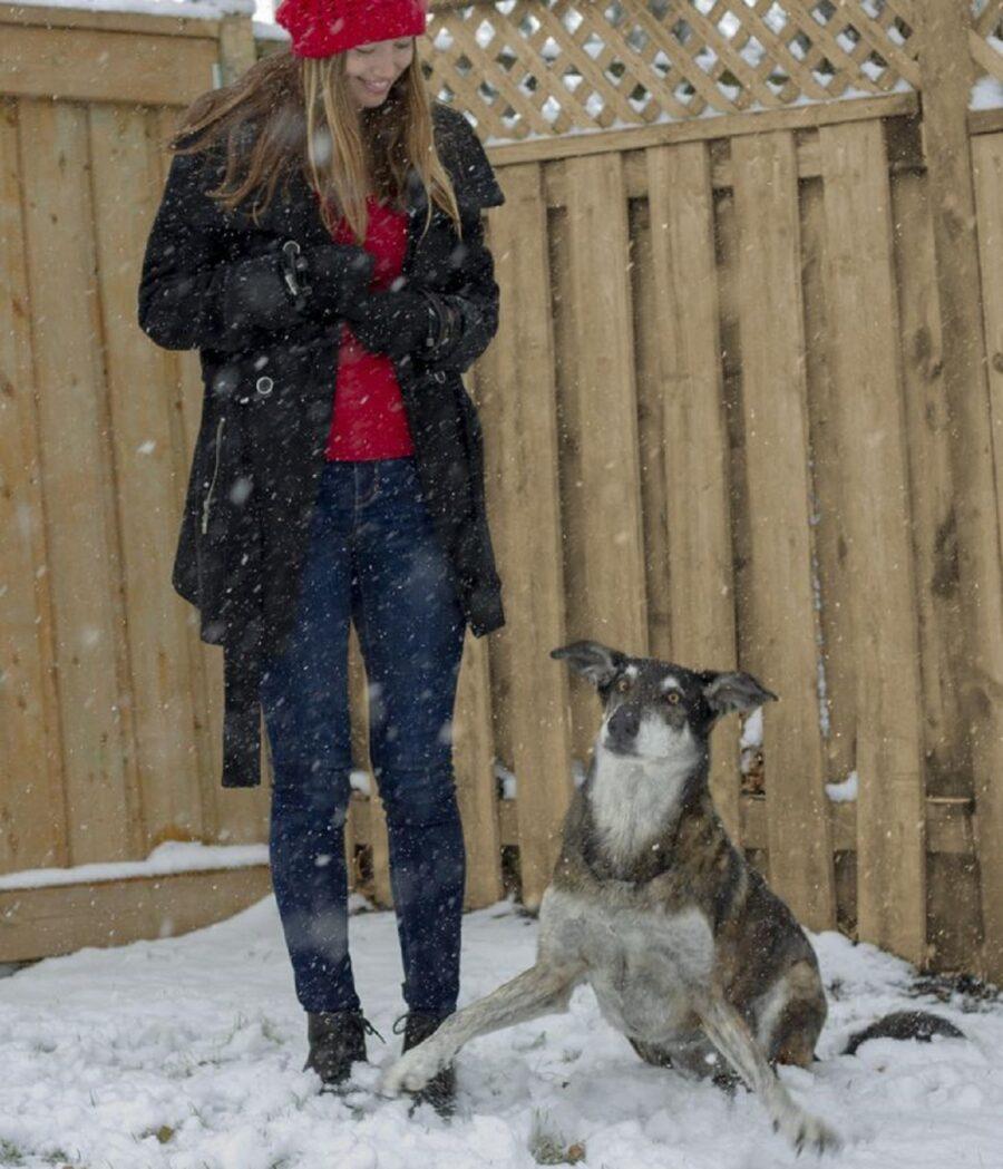 neve papà cane