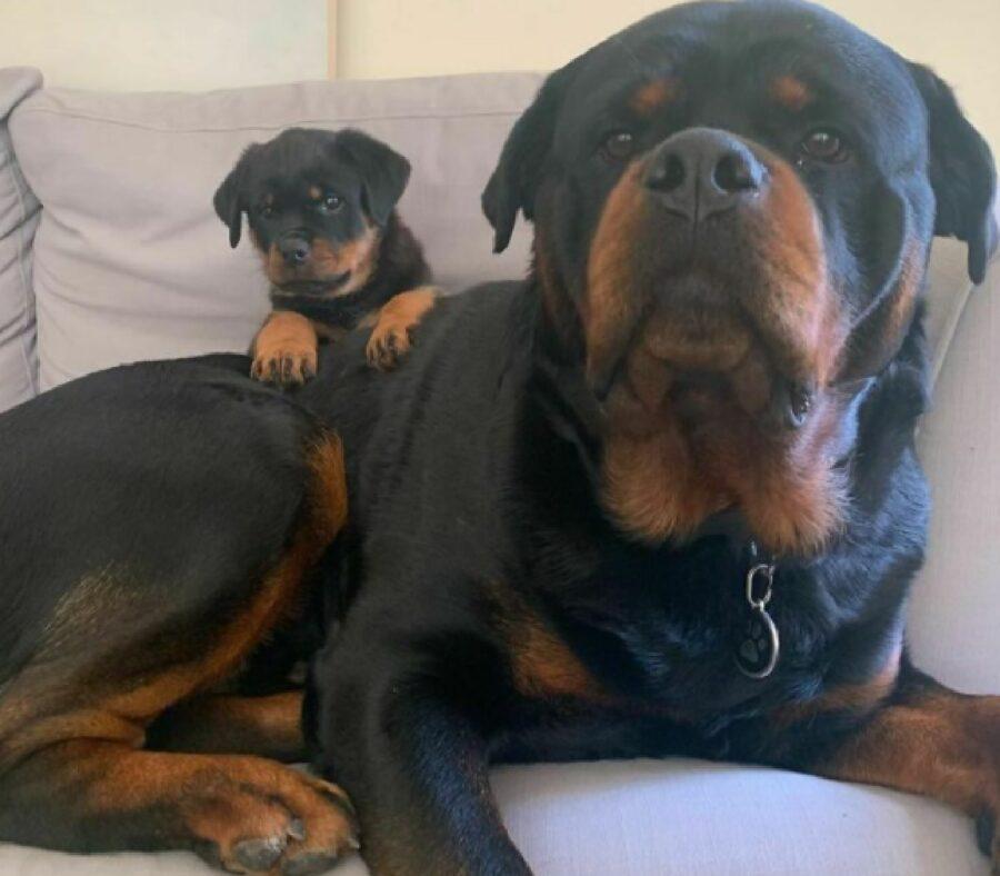 mamma cane fa da guardia