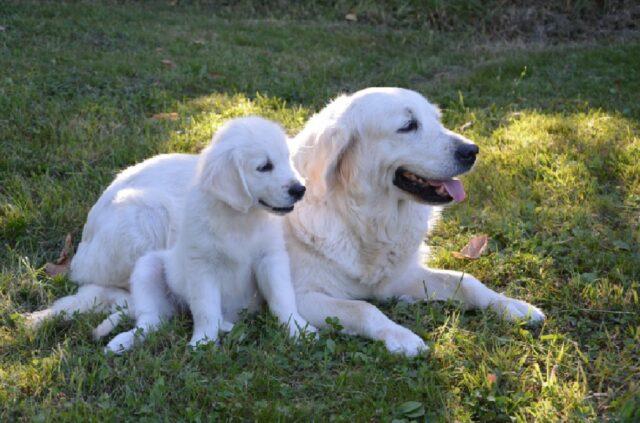 cagnoline madri cuccioli affetto