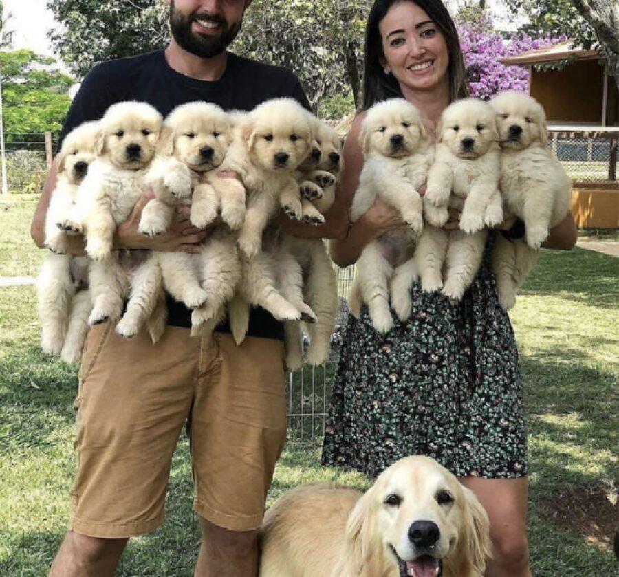 golden mamma mostra con fierezza cuccioli