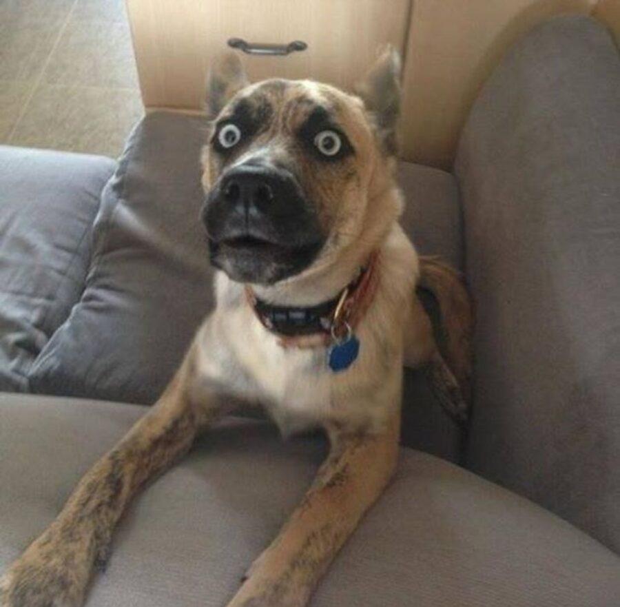 cane viso preoccupato