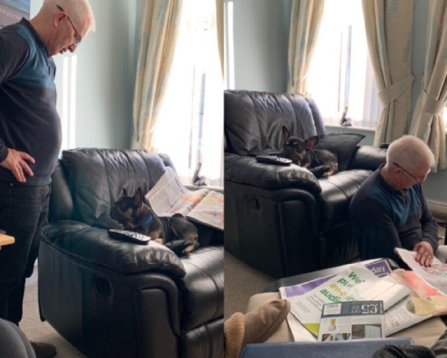 cane non fa sedere papà