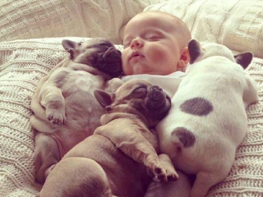 cuccioli di cane fraternità con bambino