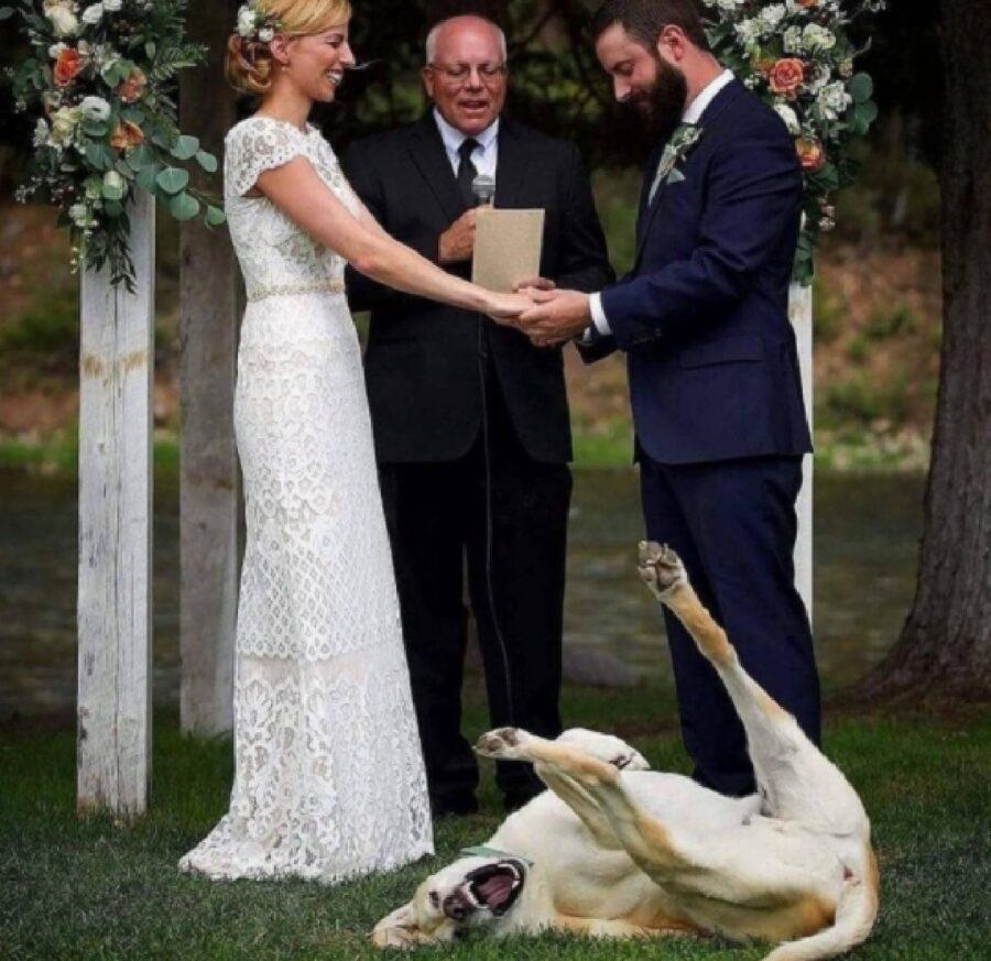 cane fa il pazzo durante cerimonia