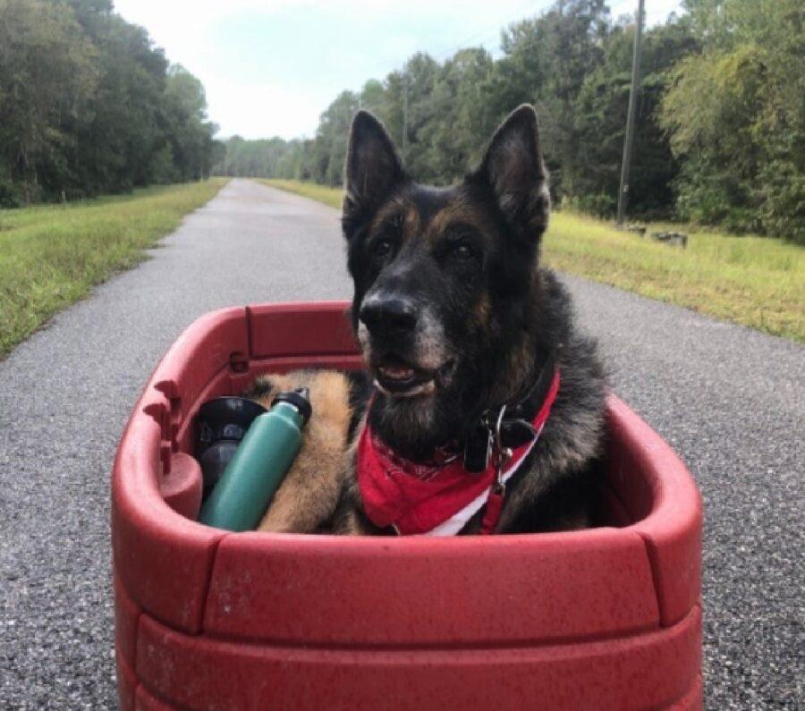 cane dentro carretto rosso