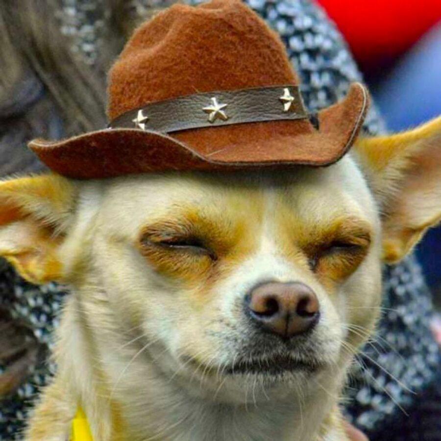 cane cappello cowboy