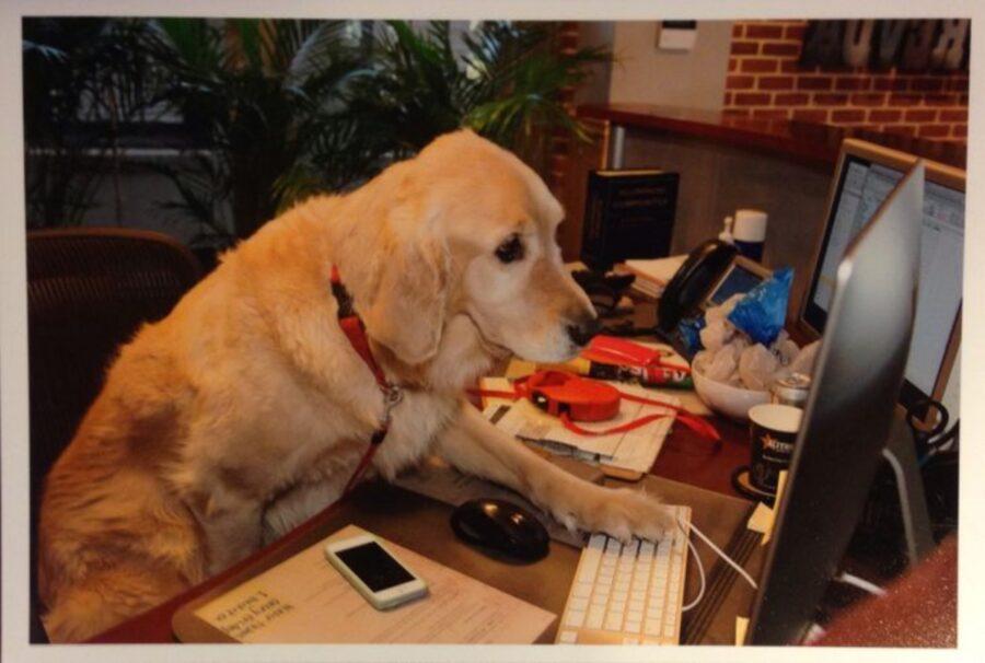 cane computer lavoro