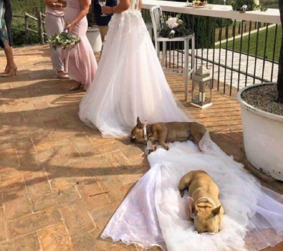 cane vestito sposa atteggiamento