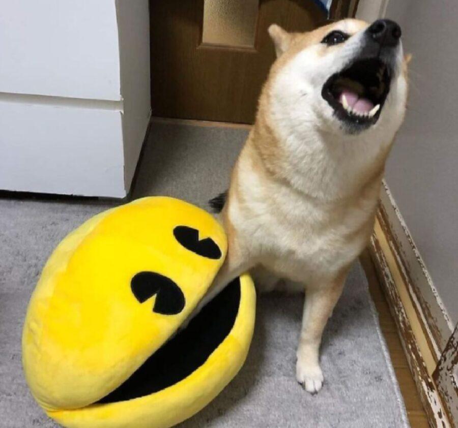cane pacman zampa mangiare