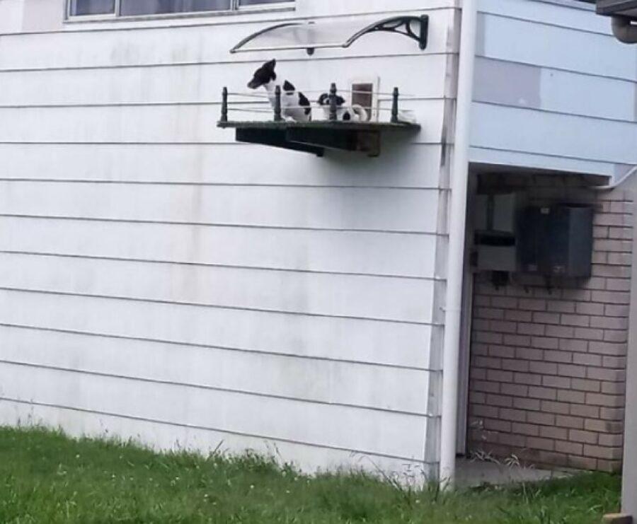 cuccioli su balconcino apposito