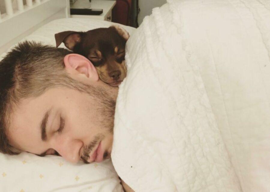 cane dorme su faccia papà