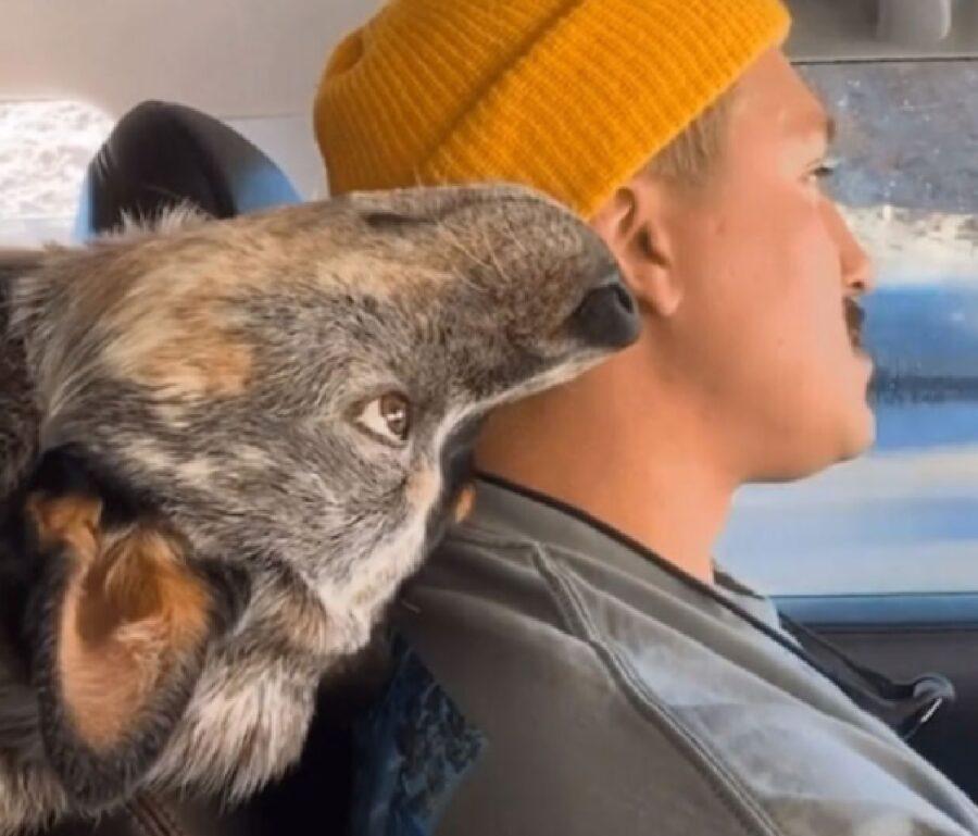 cane testa al contrario