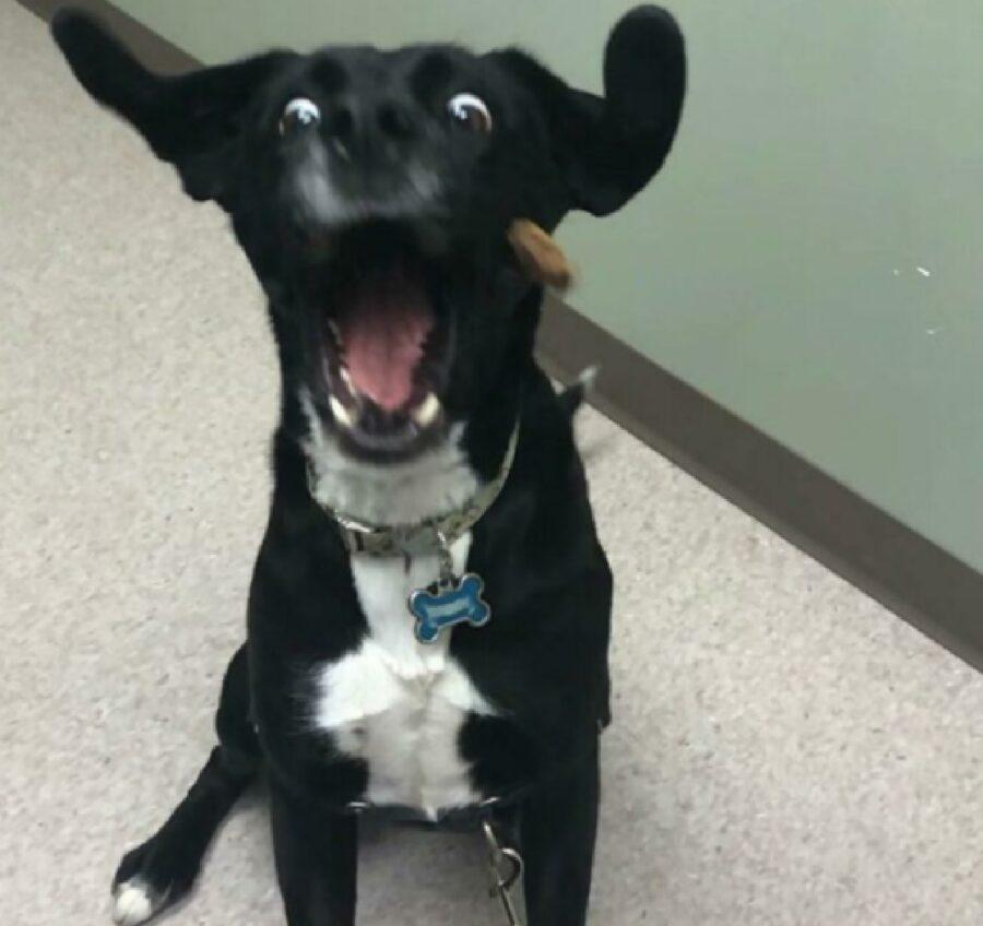 cane crocchetta davanti faccia