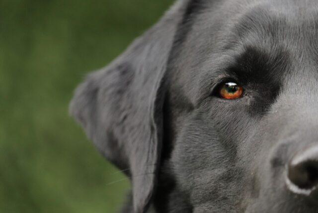 cani che conducono una vita folle