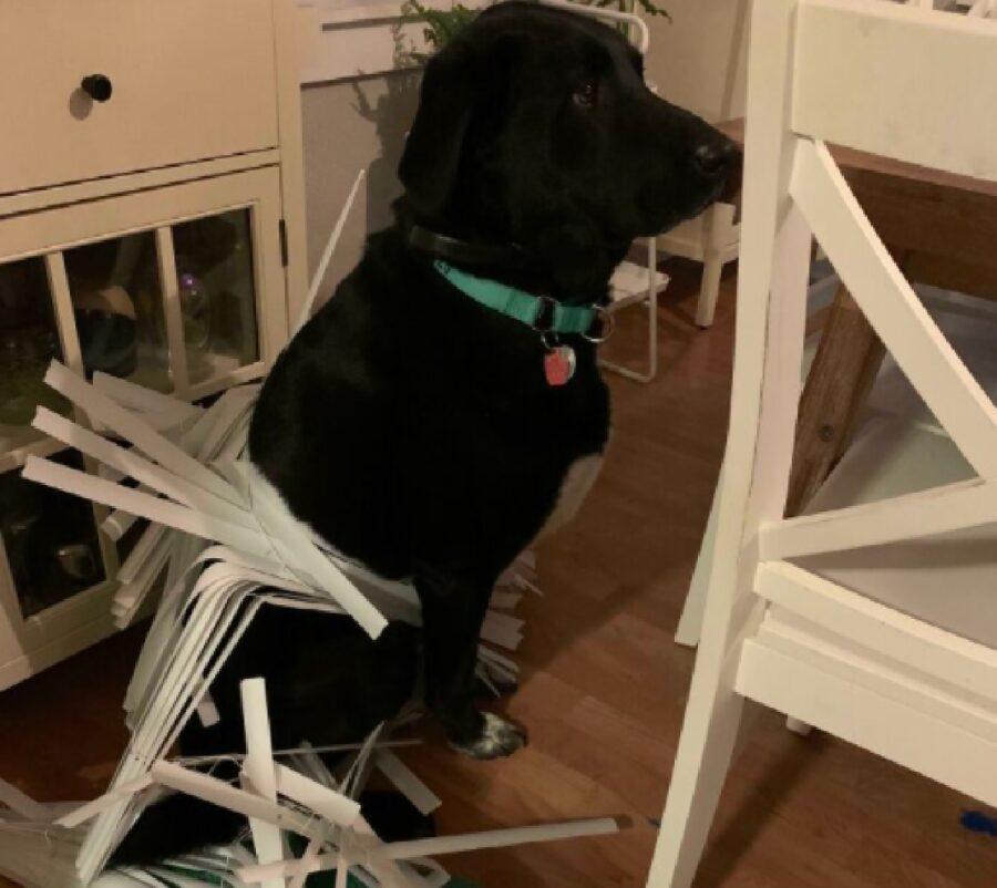 cane problemi con persiana