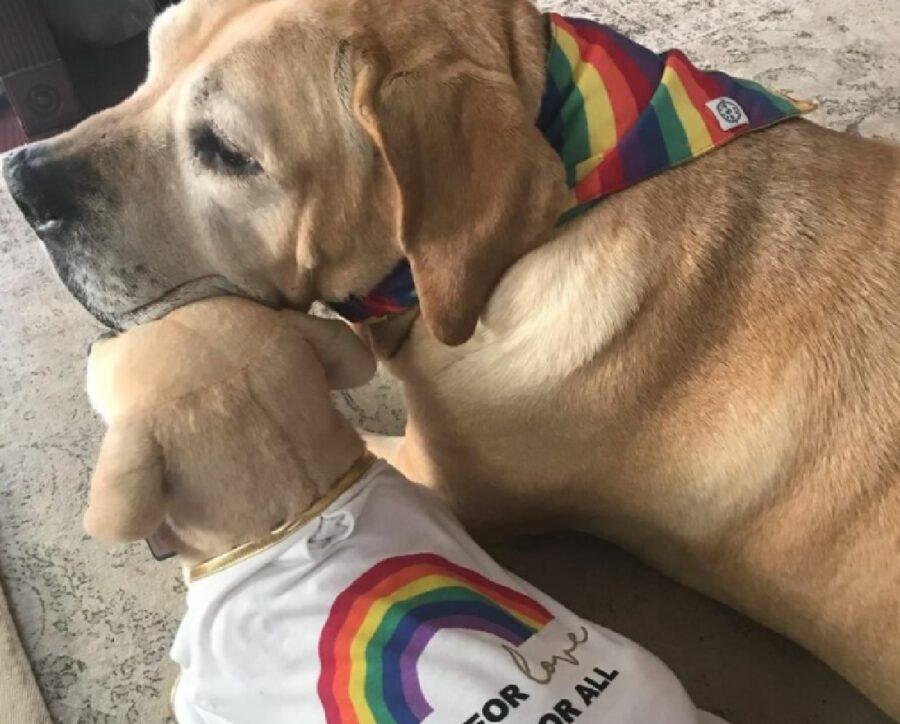 cane con bandana arcobaleno