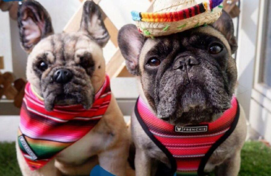 cane simile cappello e pettorina