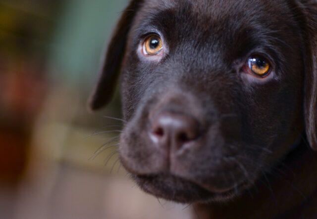 cani che sono bellissimi e amorevoli