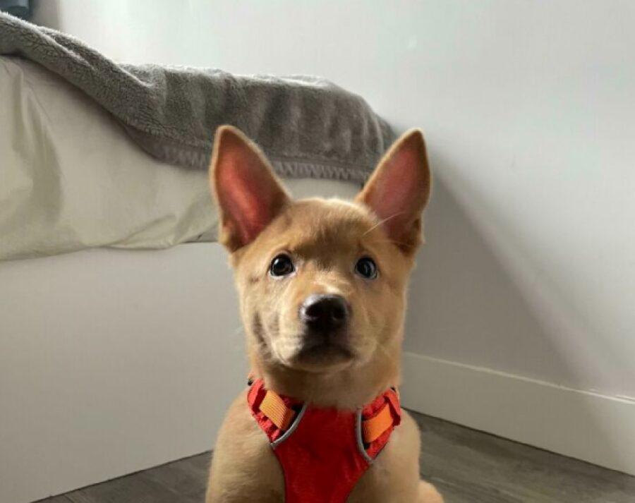 cane pettorina rossa amorevole