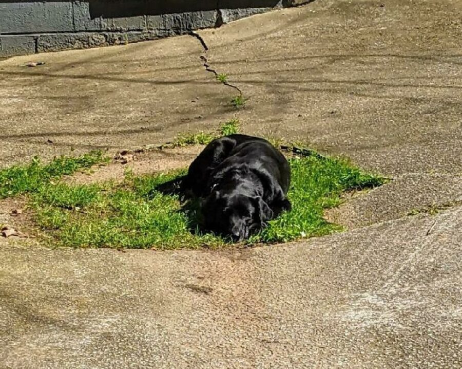 cane isola d'erba in mezzo strada