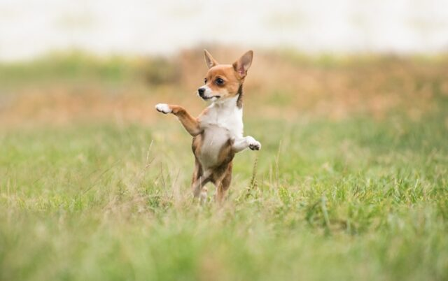 cani che hanno un concetto di spasso diverso