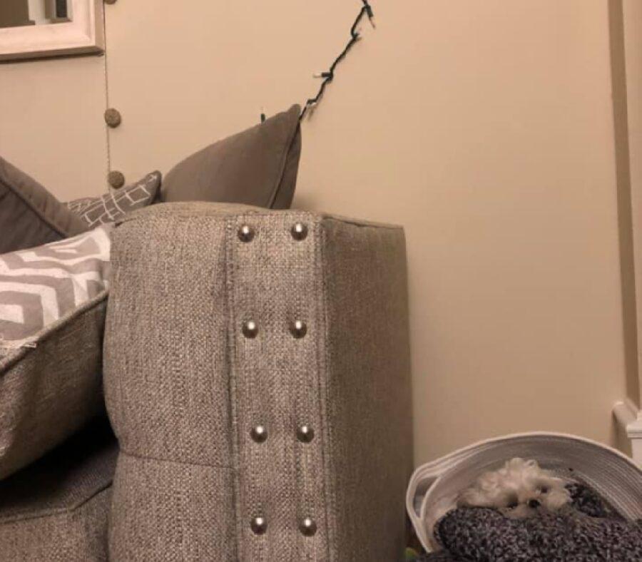 cane che adora giocare sul divano