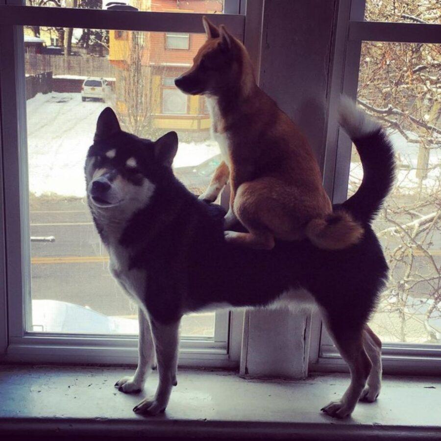 cane galoppo amico