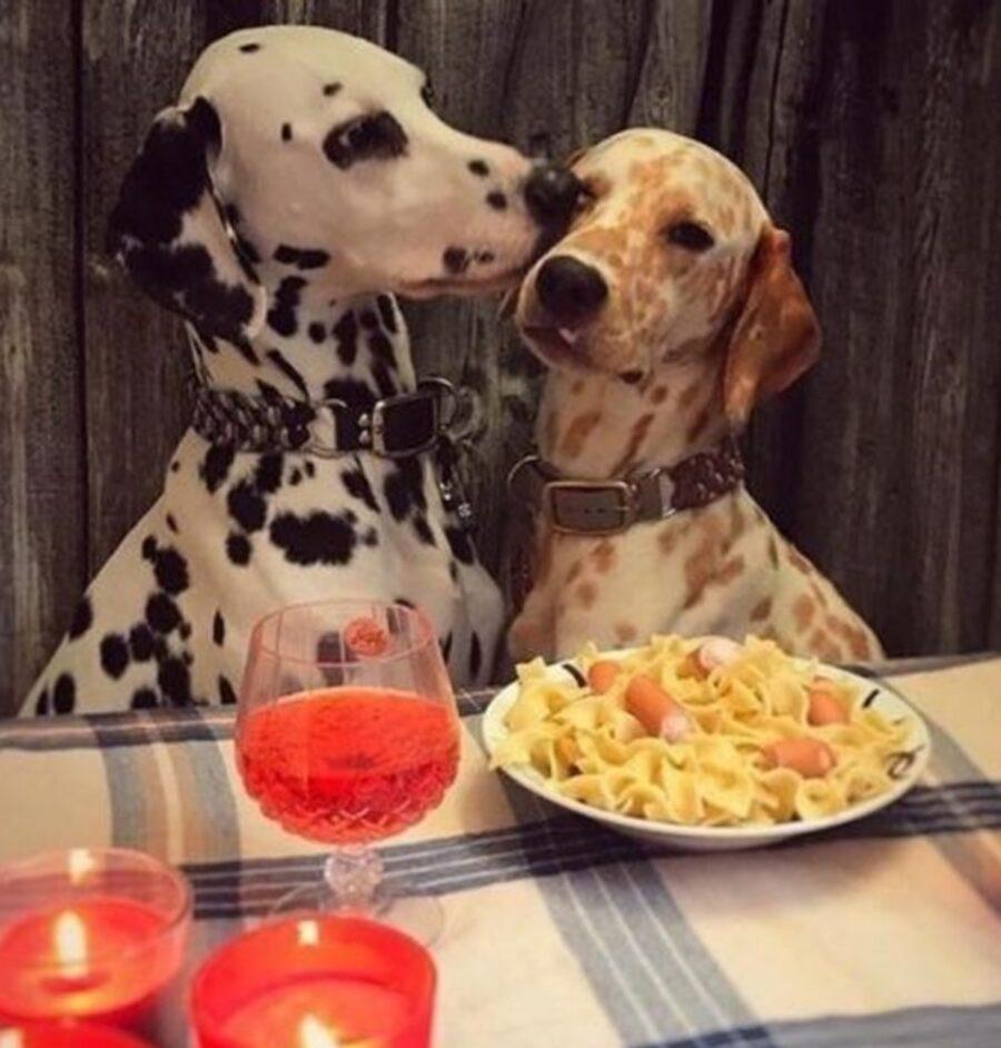 cani bacio amore