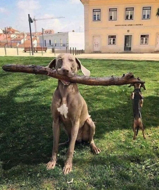 cane bastone legno