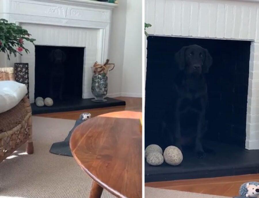 cane si nasconde camino