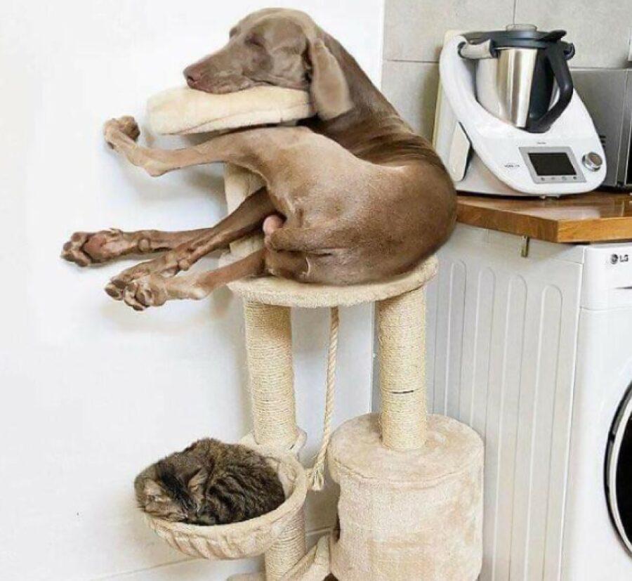 cane si arrampica come gatti