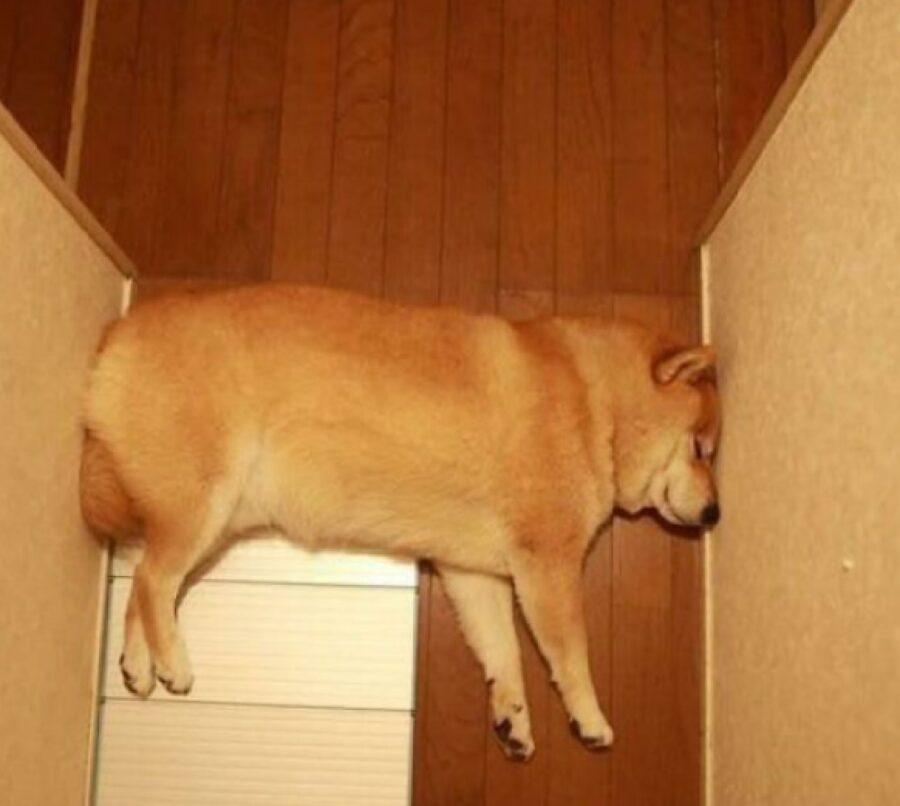 cane dorme sempre corridoio