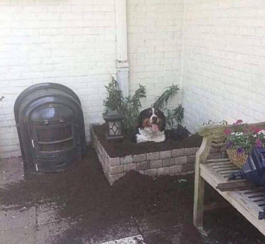 cane giardinaggio passione