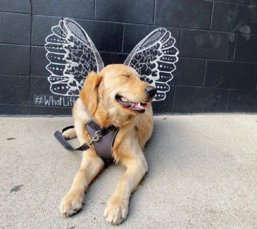 cane ali di farfalla