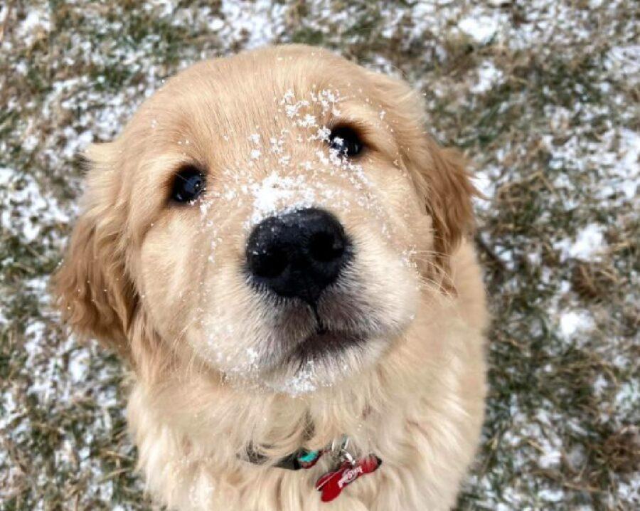 cane neve sul naso