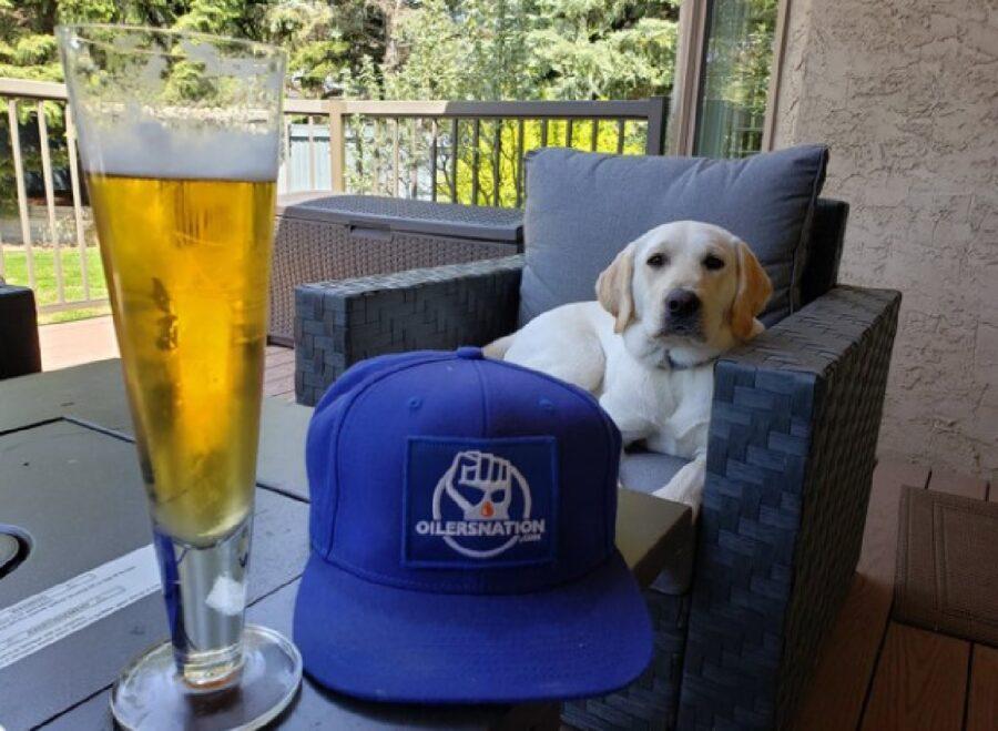 cane davanti cappello blu