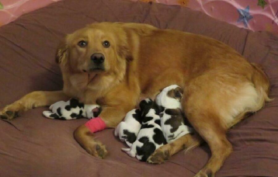cane insieme cuccioli colore diverso