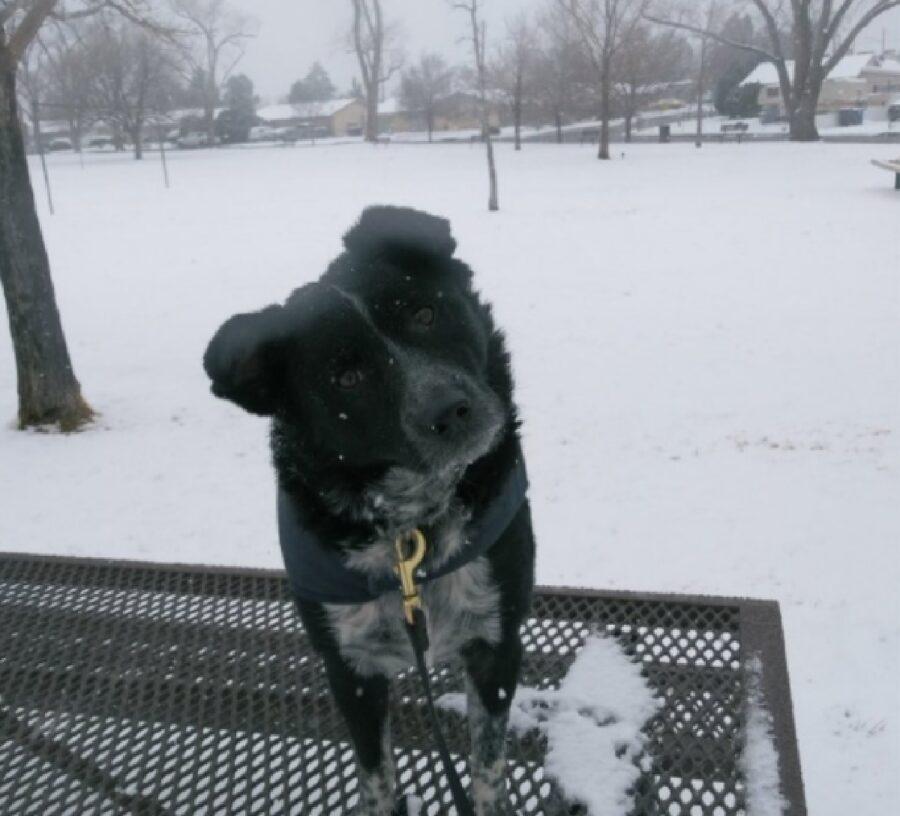 cane nero in mezzo neve