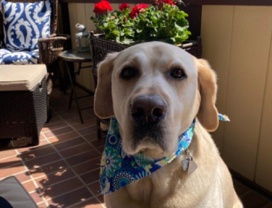 cane con bandana collo