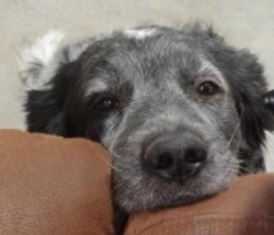 cane poggia mento per commuovere