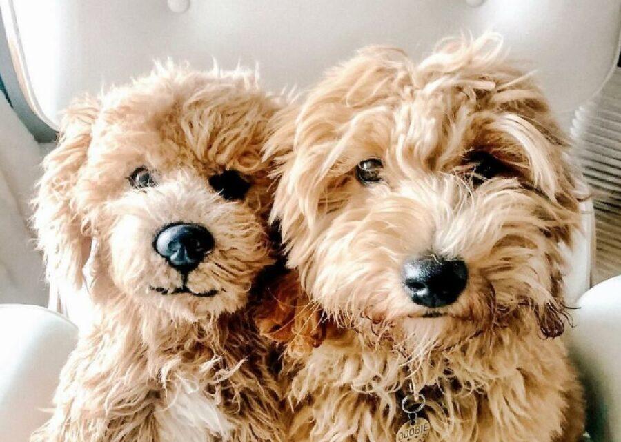 cani pelo marrone uguali