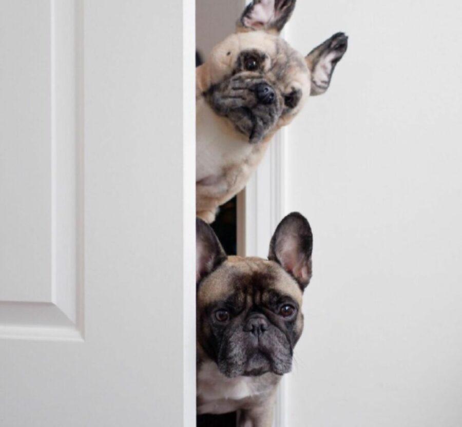cane dietro porta bianca