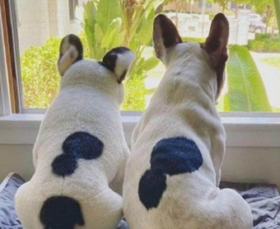 cani girati di spalle osservano finestra