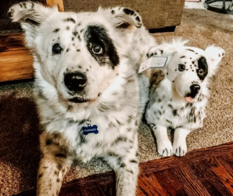 cani con pelo uguale bianco e nero