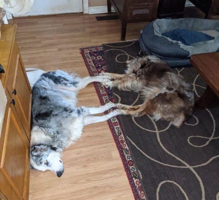 cani dormono insieme