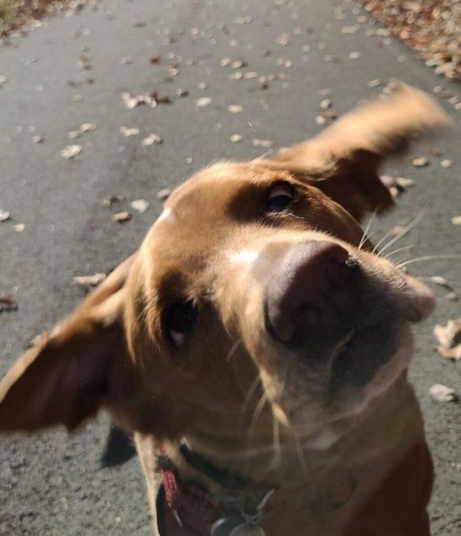 cane orecchie faccia