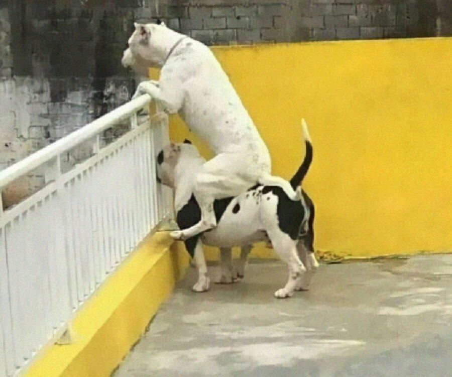cane unione fa la forza