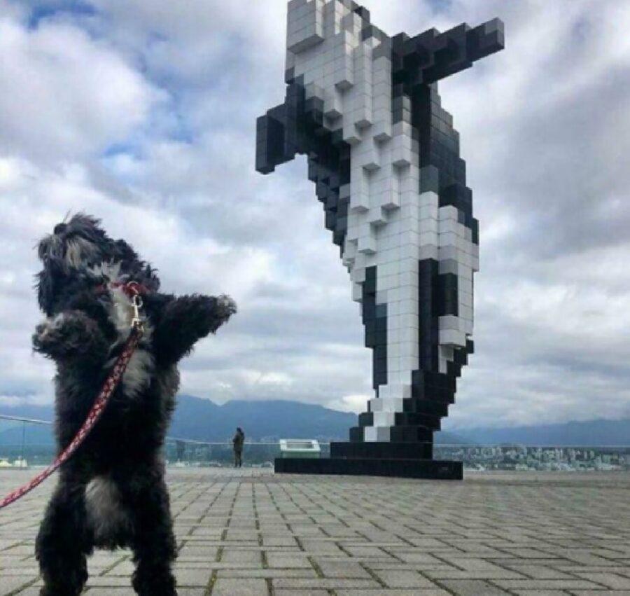 cane balena imitazione salto